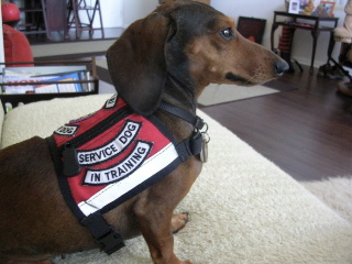 Service Animals for People with Disabilities
